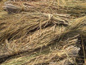 Straw-fired Jaitu plant ready for operation