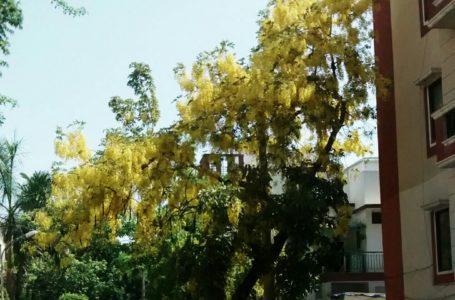 South Delhi to install biogas plant